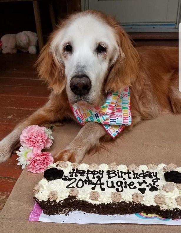 Anjing Rayakan Ultah ke-20 Tahun