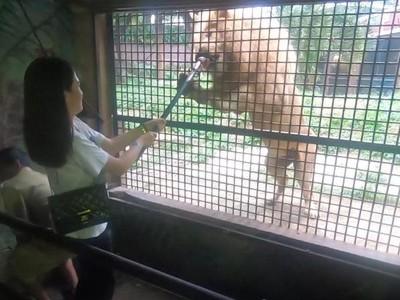 Foto: Kamu Berani Kasih Makan Harimau Seperti Ini?