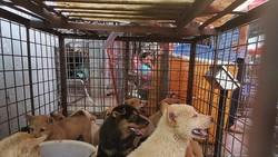 Duh! Festival Makan Daging Anjing di China Masih Berlanjut Sampai Sekarang
