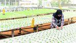 Permintaan Melonjak, Begini Cara Budidaya Sayur Hidroponik