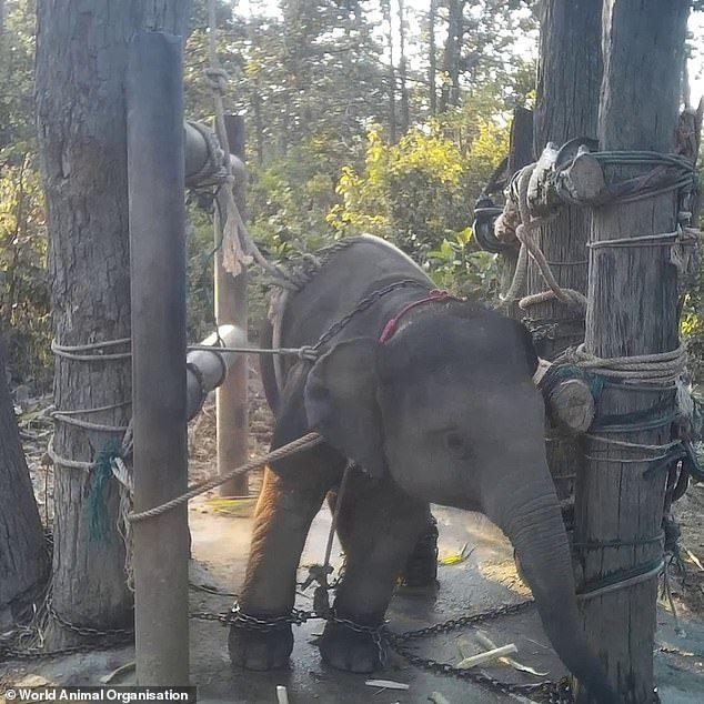 Penyiksaan Gajah