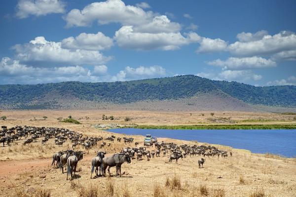 5. Kawah NgorongoroKawah Ngorongoro merupakan kaldera vulkanik utuh terbesar di dunia yang berusia lebih dari 3 juta tahun. Ribuan hewan liar merumput di sana karena tempat itu juga kaya akan persediaan air. Traveler akan melihat pemandangan indah baik dari panorama alam maupun aktivitas satwa liar di sana. (Foto: iStock)