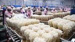 Mengintip Jeroan Pabrik Jamur Enoki cs di China