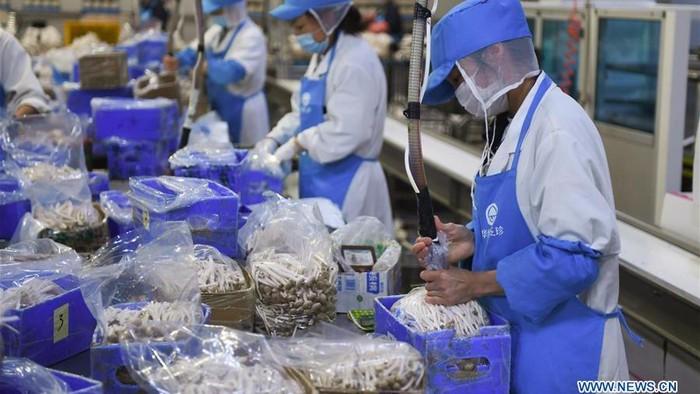 Mengintip Operasional Pabrik Jamur Enoki cs di China
