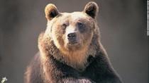Seekor Beruang Cokelat Dijatuhi Hukuman Mati di Italia