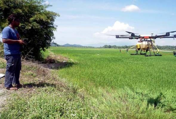 drone malaysia farmer