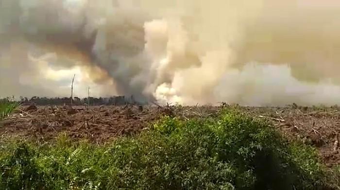 Kebakaran lahan gambut di Pelalawan, Riau (Foto: tangkapan layar video)
