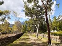 Ini pemandangan dari kampung Suku Dani. Cantikkan? (Hari Suroto/Istimewa)