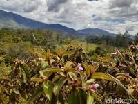Ungapakan surga yang jatuh ke bumi memang pantas disematkan untuk Papua. (Hari Suroto/Istimewa)