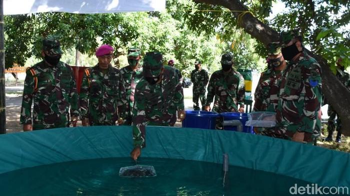Puslatpur Marinir 5 Baluran mengembangkan program ketahanan pangan