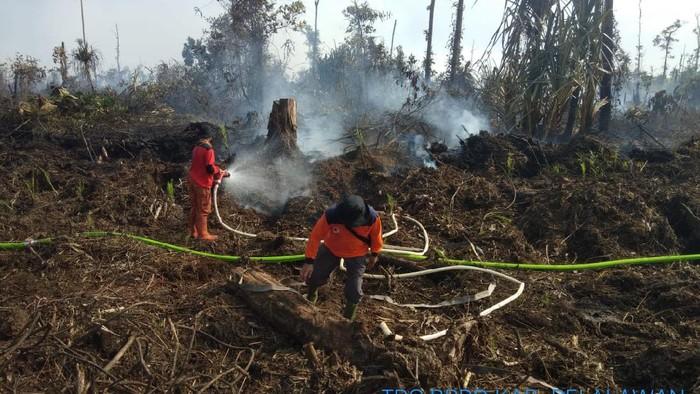 Karhutla lahan gambut di Pelalawan, Riau.