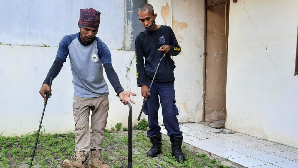 Rumah Ditinggal 5 Bulan, Warga Bekasi Temukan Ular Kobra di Pekarangan
