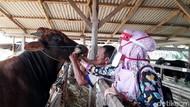 Dampak Corona, Penjual Hewan Kurban di Pinrang Sepi Pembeli