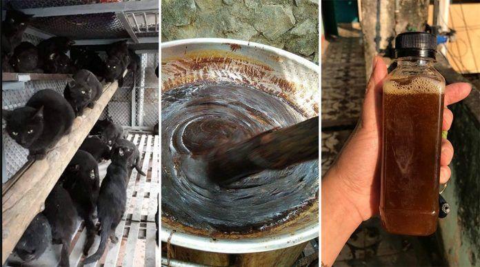 Daging Kucing Hitam Diburu di Vietnam