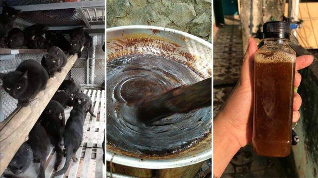 Disebut Jadi Obat Corona, Daging Kucing Hitam Diburu di Vietnam