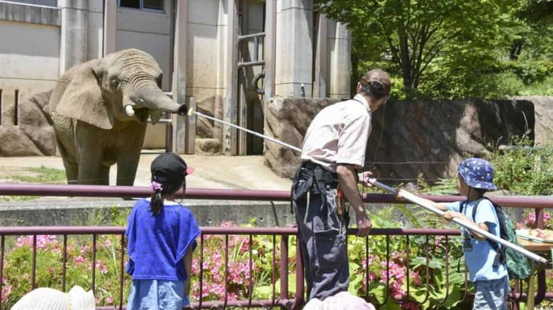 Seekor gajah betina di kebun binatang Morioka Zoo di Prefektur Iwate Jepang malas makan setelah pasangannya mati.