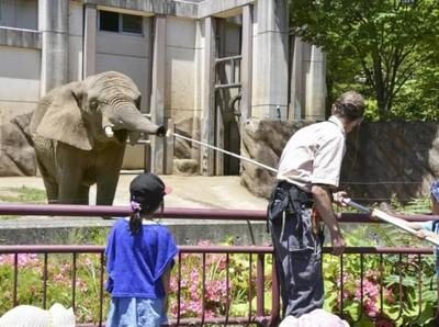Ditinggal Mati Pejantannya, Gajah Betina Ini Kehilangan Selera Makan