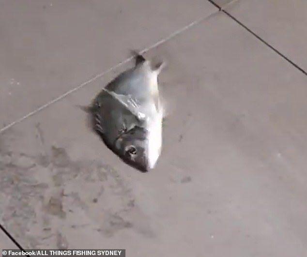 Santuy! Mancing Ikan di Balkon RUmah