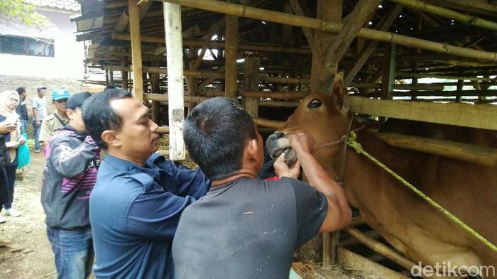 Suasana pasar hewan di Ciamis