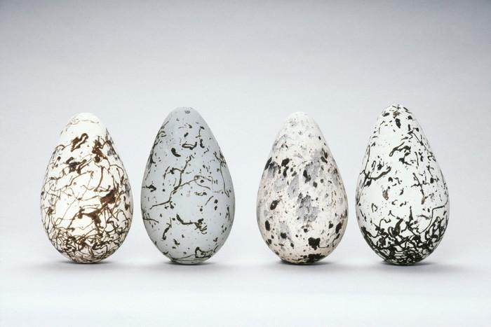 Telur Unggas Cantik