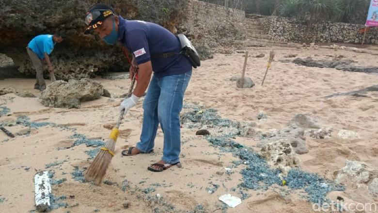 Ratusan wisatawan di kawasan pantai Gunungkidul, jumlah tersebut akumulasi sejak tanggal 26 Juni 2020 hingga hari ini, Kamis (2/7/2020). Tak hanya itu, sore tadi sejumlah ubur-ubur memadati pinggir pantai.