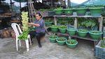 Berkebun Sayuran Jadi Hobi Baru Warga India di Era New Normal