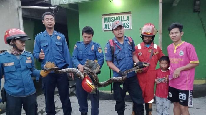 Damkar Bogor evakuasi ular Sanca dari plafon rumah warga.
