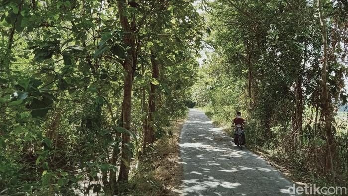 Daun-daun pohon di hutan Gunung Pegat, Klaten mulai berguguran