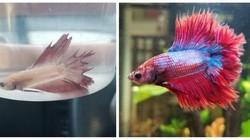 Potret Hewan Sebelum dan Setelah Dirawat Manusia