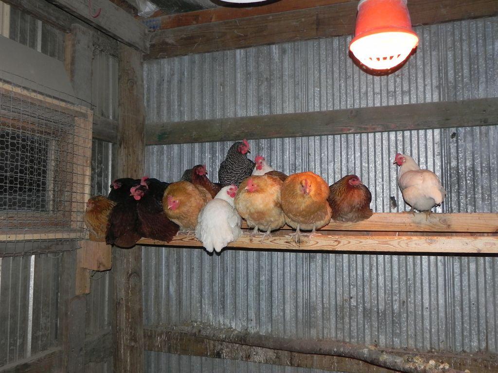 Kisah Orang-orang yang Makan dan Tinggal di Kandang Hewan