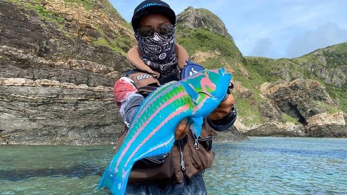 Ikan warna-warni, surge wrasse