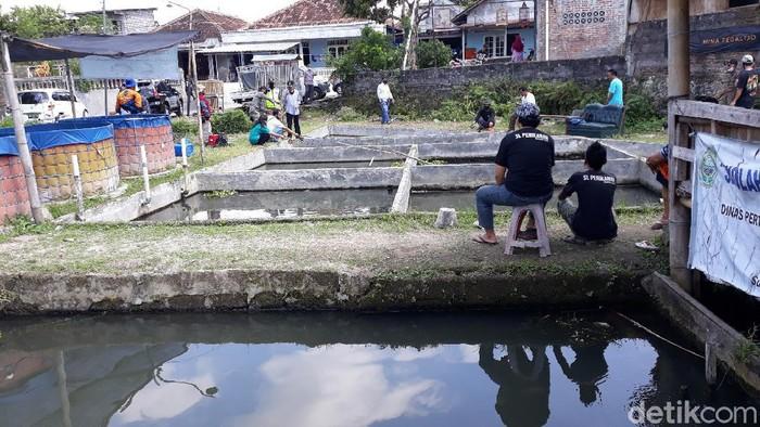 Pandemi Bikin Peternak Ikan Air Tawar di Bantul Kesulitan Jualan