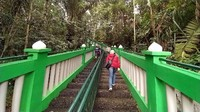 Lokasinya berada di Desa Nagarapageuh, Kecamatan Panawangan, Ciamis. Di lokasi hutan ini juga terdapat tangga dan jalan untuk akses menyusuri hutan. (Dadang Hermansyah/detikcom)
