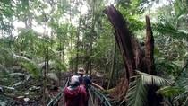 Mitos Hutan Pasarean: Berani Ambil Pohon Bakal Didatangi Maung