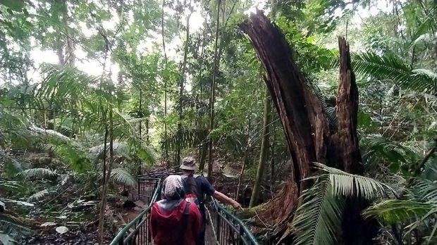 Mitos di hutan ini, siapa mengambil pohon akan didatangi Maung
