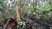 Tak disangkal, mitos ini membuat Hutan Pasarean masih asri dengan sejumlah pohon berdiameter besar yang usianya sudah mencapai ratusan tahun. (Dadang Hermansyah/detikcom)
