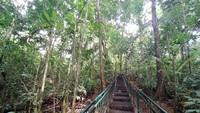 Berkat hutan itu, sumber mata air masih terjaga. Warga setempat tak kekurangan air bersih sepanjang tahun. (Dadang Hermansyah/detikcom)