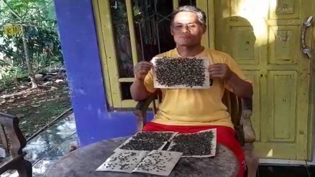 Ribuan lalat teror pemukiman warga di Sukabumi