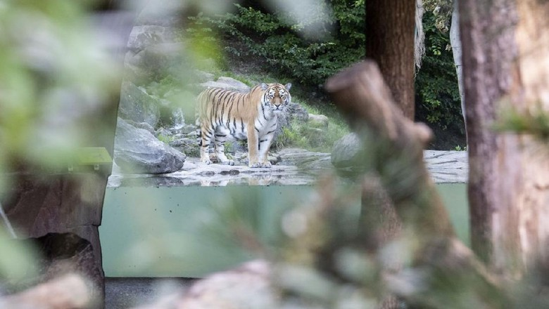Kebun Binatang Zurich
