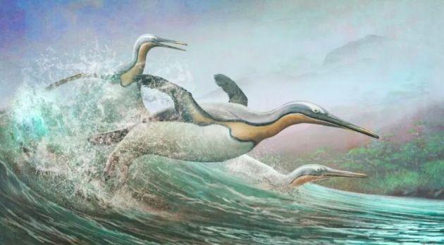 penguin purba