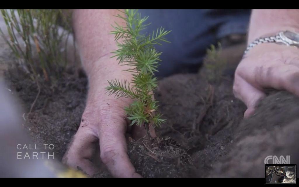Pohon cedar di Afrika Selatan