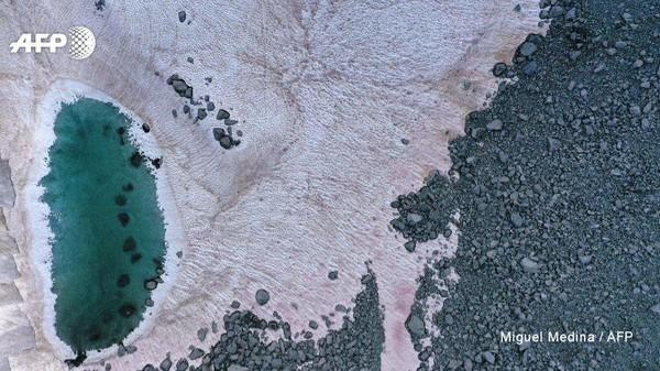 Disebutkan, algae serupa juga dapat ditemui di zona gelap Greenland. Sebuah kawasan yang ditutupi debu dan karbon hitam yang membantu penyerapan nutrisi untuk algae berwarna gelap (Miguel Medina/AFP)