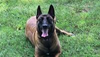 Heroik! Anjing Selamatkan Dua Keluarga dari Kebakaran