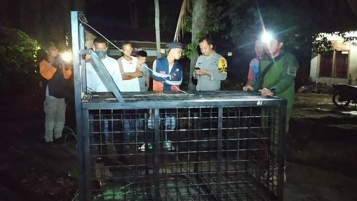 BKSDA Riau menyiapkan perangkap untuk mengevakuasi beruang madu yang masuk permukiman warga (Foto: Istimewa)