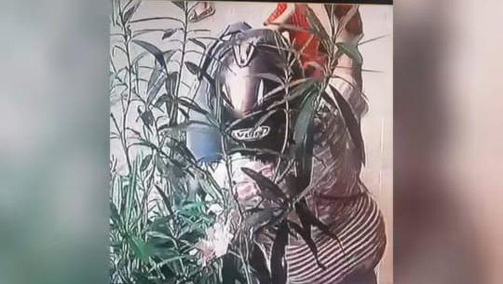 Miris! Sambil Bawa 2 Bocah, Emak-emak Curi Tanaman Bunga di Yogya