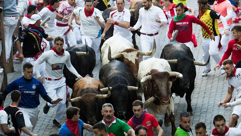 Participants run next to Palmosilla fighting bulls on the seventh bullrun of the San Fermin festival in Pamplona, northern Spain, on July 12, 2019. - People from around the world flock to the city of 200,000 residents to test their bravery and enjoy the festivals mix of round-the-clock parties, religious processions and concerts. (Photo by JAIME REINA / AFP)