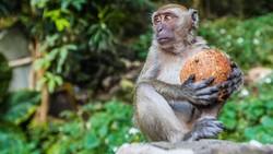 Viral Pawang Aniaya Monyet di Jaktim, Satpol PP Turun Tangan