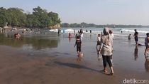 Ubur-ubur Biru Hantui Pantai Batukaras Pangandaran
