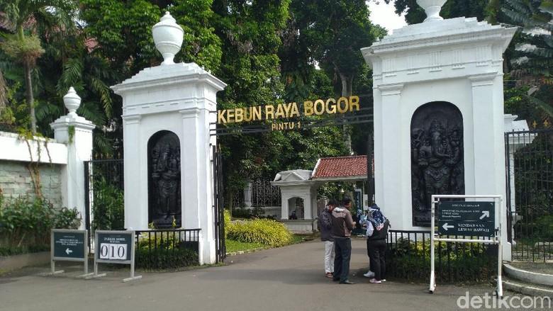 Suasana Kebun Raya Bogor, Jawa Barat, Selasa (7/7/2020).