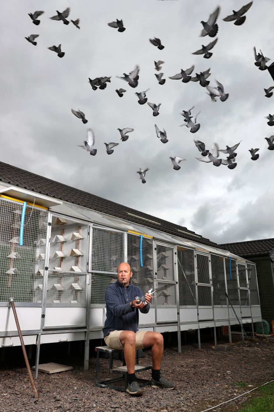 YEOVIL, ENGLAND - JUNE 25: Pigeons are liberated by the Warwickshire and District Federation at  Yeovil Showground on June 26, 2020 in Yeovil, England. (Photo by Michael Steele/Getty Images)